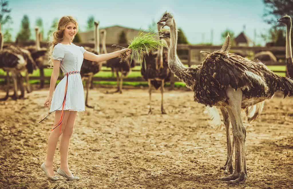 Ostrich farm girl