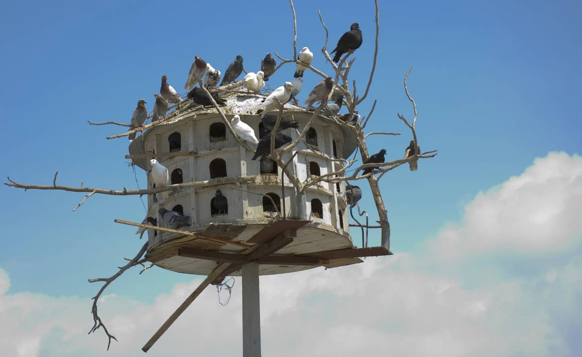 Doves in dovecot / pigeon house