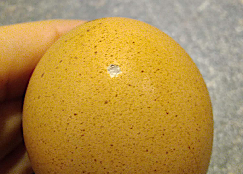 Pinhole in egg