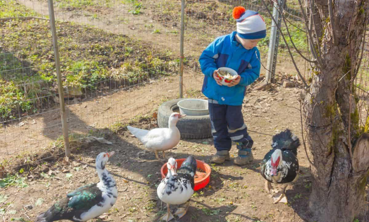 Child with ducks