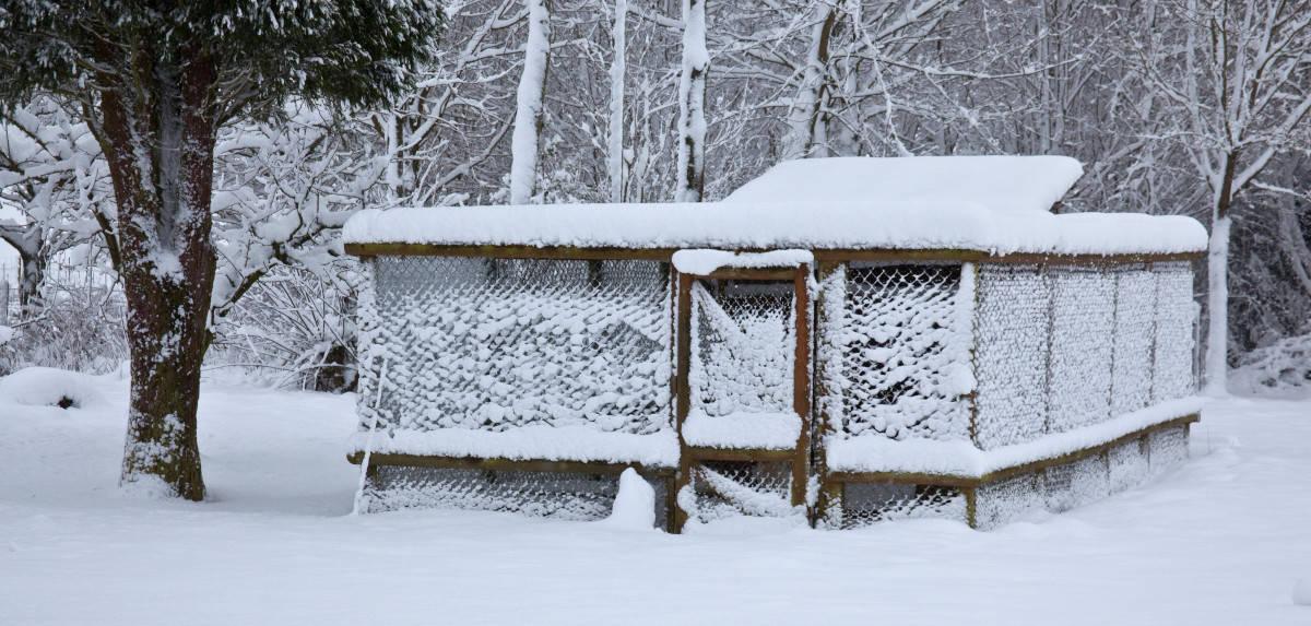 Snow coop